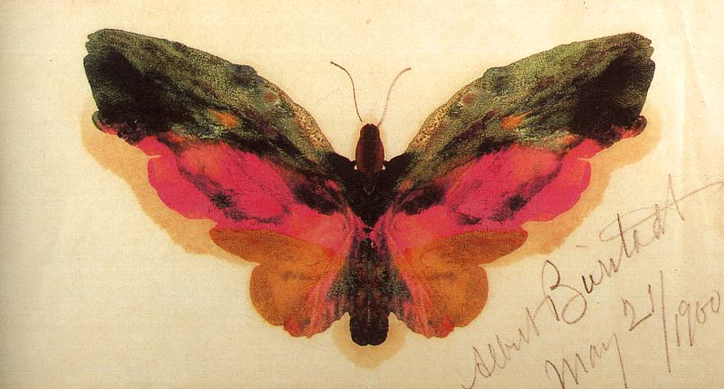 Butterfly, 1900, on paper with graphite pencil